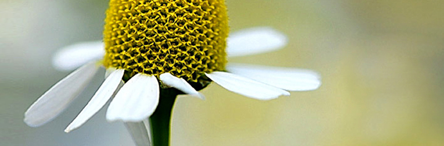 Fiori e Floriterapia